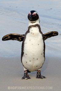 African Penguin Encounter