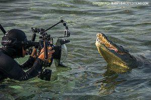 Photographing American Crocodiles