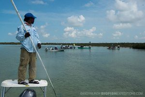 looking for sawfish in Andros