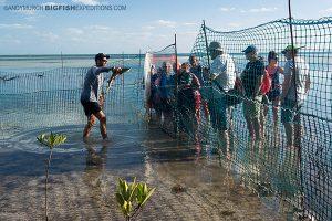 Bimini shark lab 2016