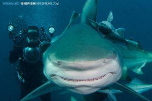 Blacktip Shark Diving in Africa