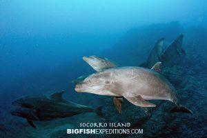 dolphin encounter socorro