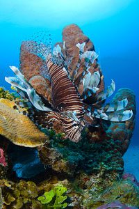 Cat Island Reef Diving