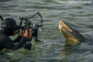 Photographing crocodiles