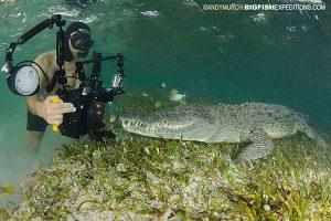 Underwater photography of crocodiles