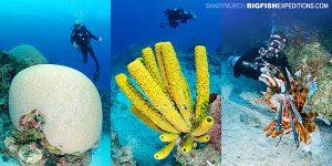 Chinchorro Reef