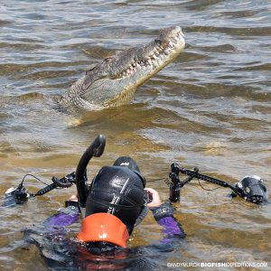 Snorkeling with crocodiles