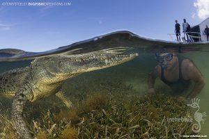 Diving with crocodiles at Banco Chinchorro
