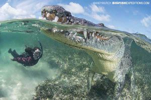 Diving with American Crocodiles in Mexico
