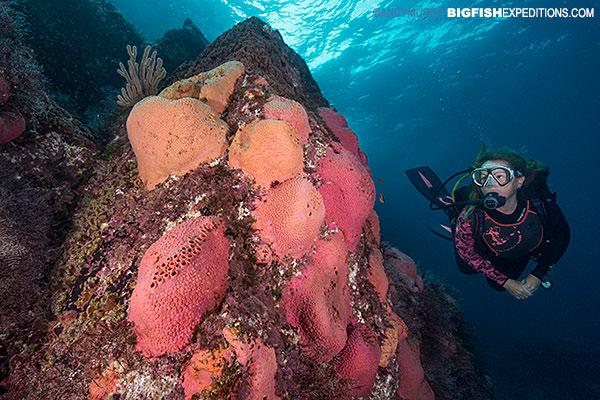 Diving_Baja pink reefs