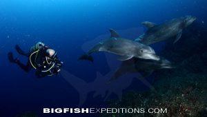 Dolphin Diving Socorro