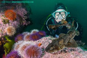 Diver with a brown catshark in False Bay, South Africa