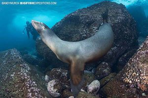 Galapagos sea lion in the Galapagos Islands