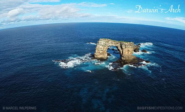 Galapagos diving Darwins Arch