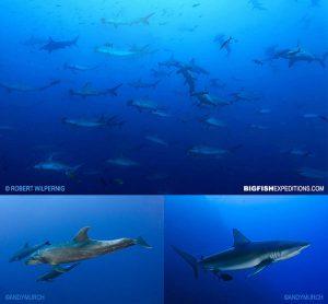 Galapagos diving Darwin Island