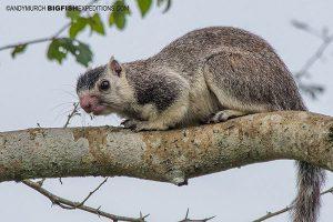 Sri Lanka Giant Squirrel Safari