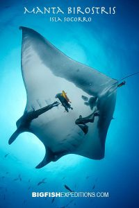 giant manta ray encounter