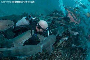 Diving in a sharknado