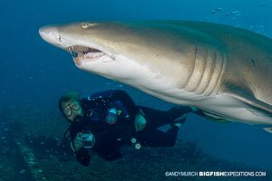 diver making eye contact with a shark to avoid an attack
