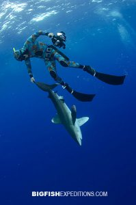 Tonic immobility in oceanic whitetip shark diving on Cat Island, Bahamas