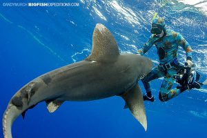 diver on the surface fending off a shark attack