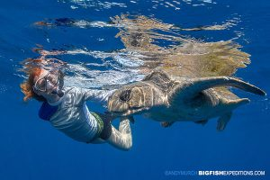 Snorkelling with an olive ridley sea turtle.