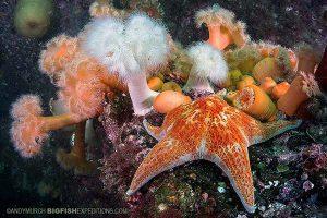 Beautiful reef in Alaska while diving