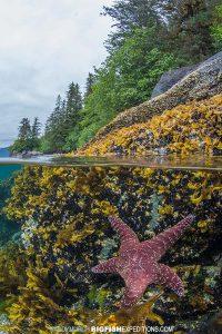 Dive site in Alaska