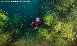 Diver in a black coral forest in the sea of cortez