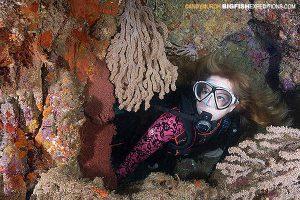 diver in hard corals in the sea of cortez