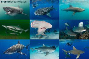 shark diving trips