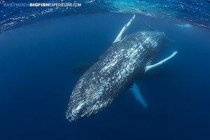 Amazing humpback whale encounter