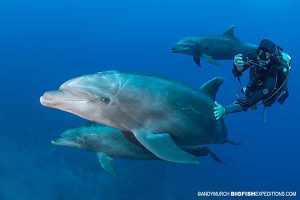 Diving with friendly dolphins at Socorro.