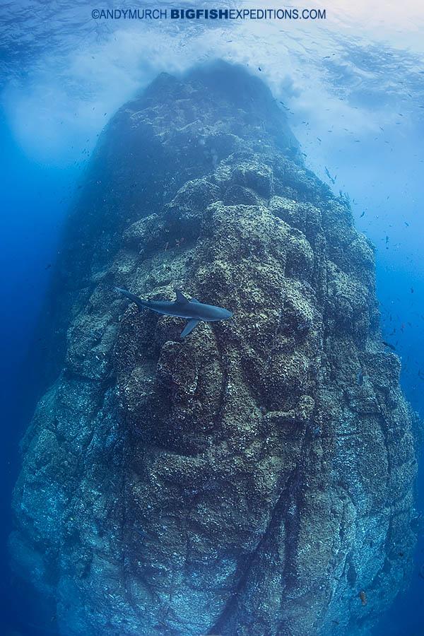Roca Partida Shark Dive