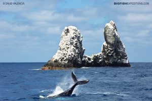 Roca Partida diving with humpback whales