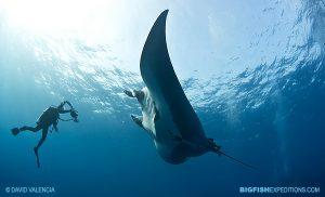 Manta ray diving expedition