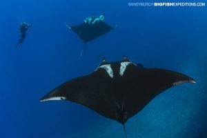 Manta Ray Diving
