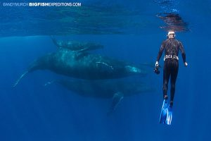 Diver with Humpback mom and calf at Socorro Island