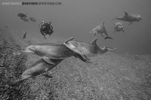 Diving with dolphins in Socorro Island, Mexico.