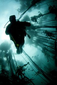 kelp forest dive, South Africa