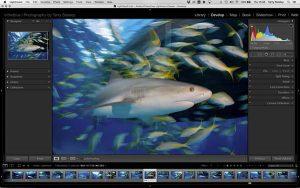 shark photography workshop