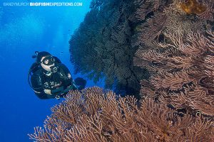 DIVE 10: Dove a new site for me named Mountains. Absolutely beautiful reef with a resident population of reef sharks. Super healthy coral walls dripping with enormous gorgonians.