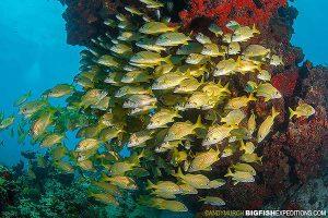 Beautiful underwater reef in Cancun