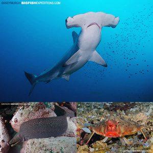 Galapagos diving Wolf Island