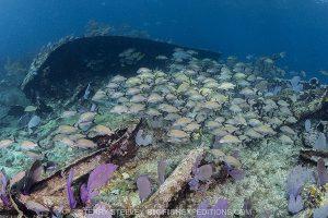 Wreck diving at Chinchorro Banks