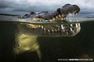 Crocodile split underwater diving