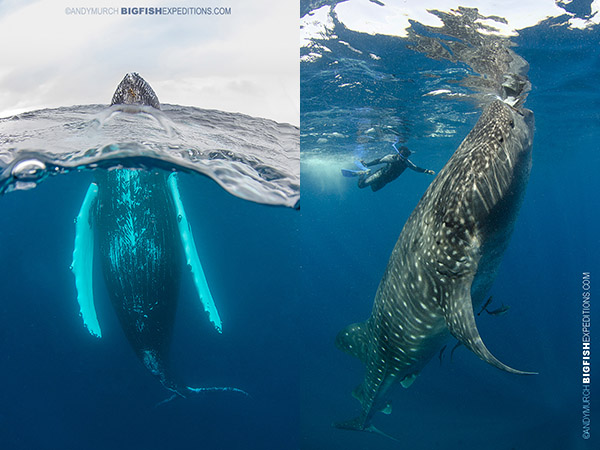 photographing whale behaviors