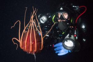 Deepwater Helmet Jelly Norway.