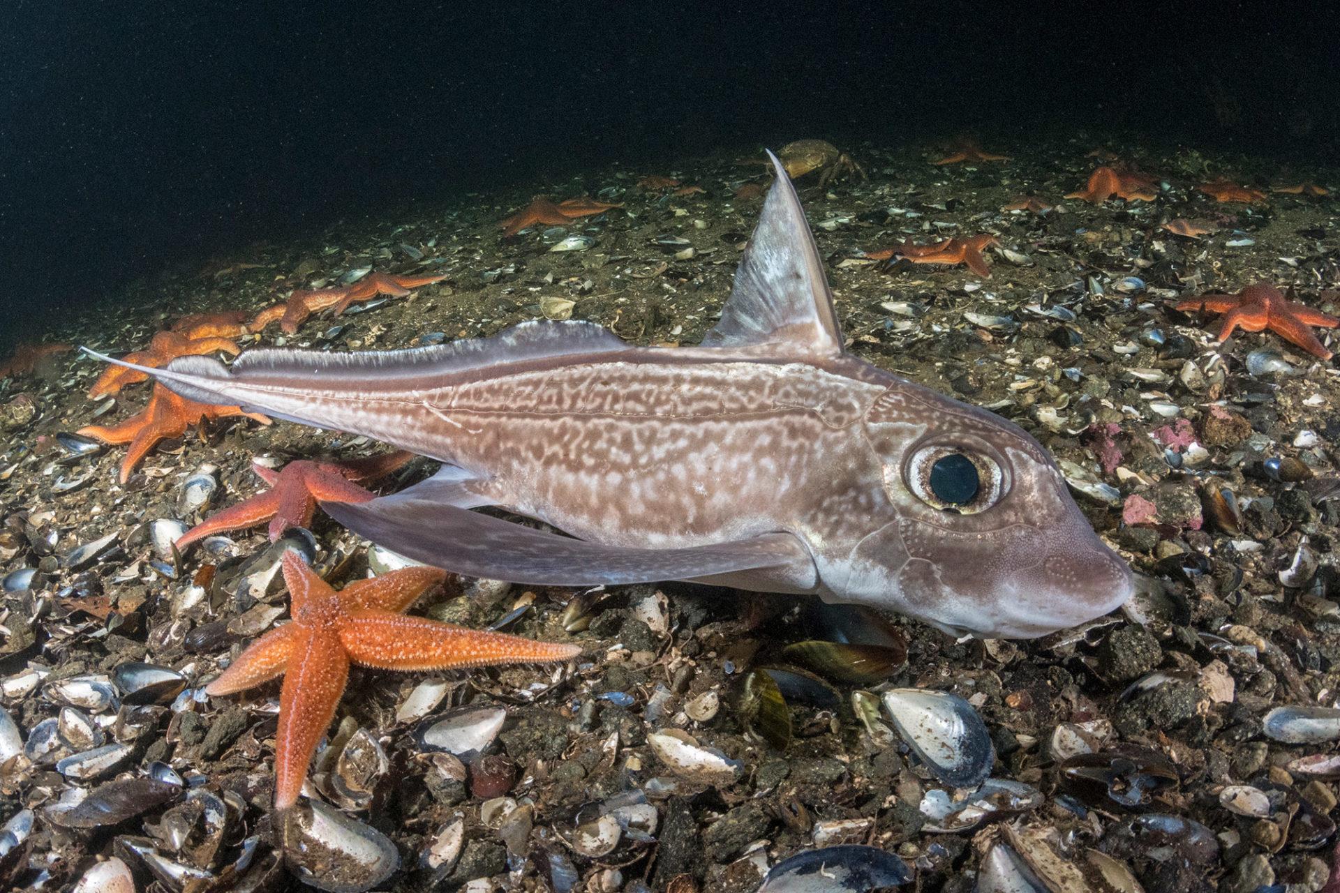 Deep sea shark diving Norway