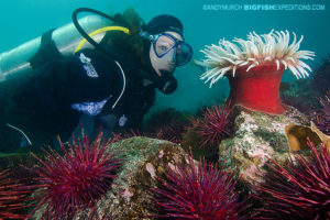 Scuba diving and macro photography on vancouver island.